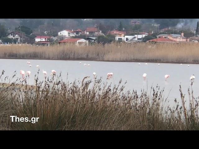 Η λιμνοθάλασσα Πάλιουρα στη θαλάσσια περιοχή Αλυκές στην Επανομή