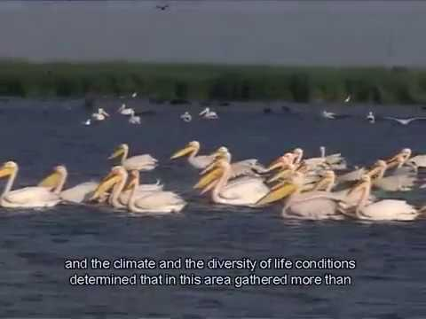 Danube Delta  - Delta Dunarii - Documentary ( English subtitle )