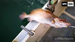 MFA X TMFT SLOW JIGGING PORT KLANG, DAVID FISHING. IBU GELAMA