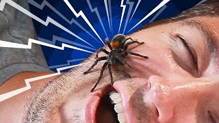 Do You Really Swallow Spiders When You Sleep?