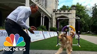 Behind The Scenes: Westminster Dog Show Held Outside For The 1st Time
