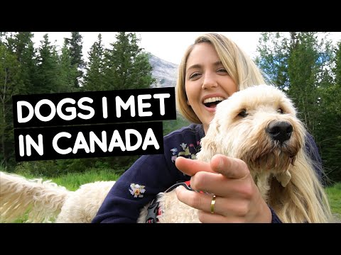 DOGS I Met In CANADA | Little Grey Box