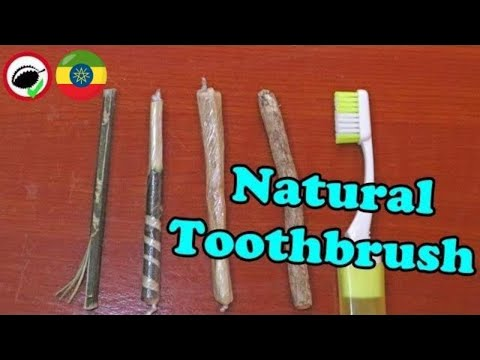 THE STICK THAT CLEANS YOUR TEETH (Toothbrush tree) - Most Amazing Plants in the World!