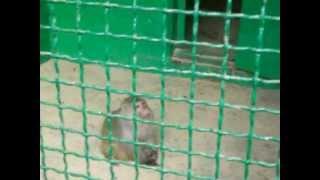 мартышка и яблоко.MOV(Обезьянка в зоопарке г.Мена (Черниговская область, Украина), 2012-07-22T18:05:56.000Z)