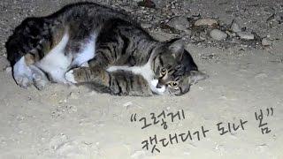 길고양이랑 친해지기 29, 그렇게 캣대디가 되나 봄..