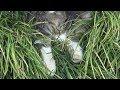 【猫】前足をダラ~ンと投げ出して寝る【Cat】