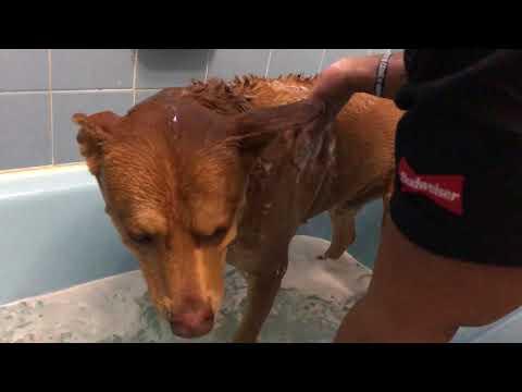 Dog Bath Time 🐾🛁 | He Hates Water | Vlog
