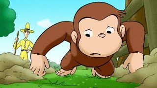 Jorge el Curioso en Español 🐵 Ardilla por un Día 🐵 Mono Jorge 🐵 Caricaturas para Niños