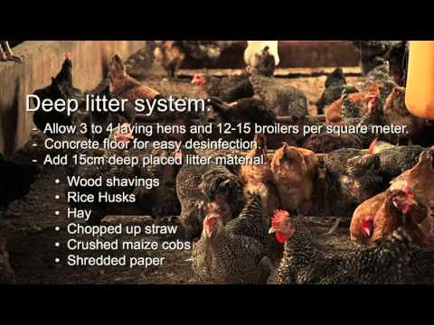 Poultry Farming training video ZOA Uganda