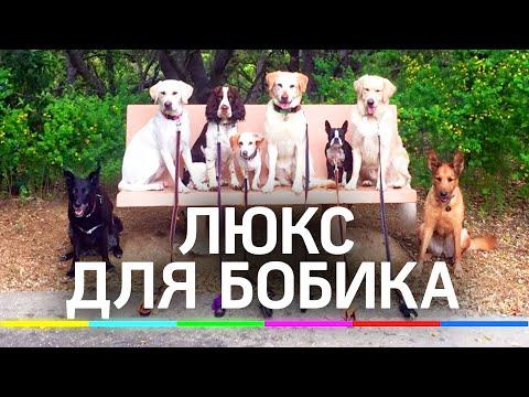 Собачники vs собакофобы. Площадки для выгула предложили сделать обязательными за счёт правительства