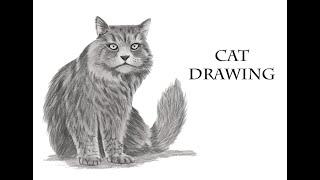 How To Drawing Cat - Kedi Nasıl çizilir