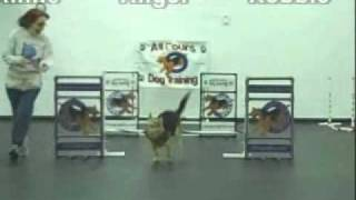 All Fours Dog Agility Training Jumps Into 2010.wmv