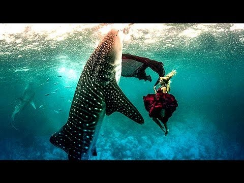 Models Swim With Whale Sharks For Fashion Shoot