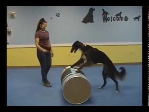 Champion Trick Dog video submission