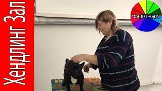 Ринговая Подготовка Собак в Хендлинг Зале