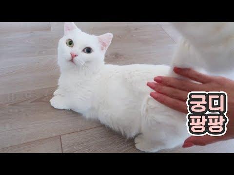 마사지 해달라고 오는 고양이 - 개냥이 백과사전 꼬부기