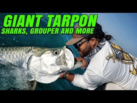 GIANT TARPON vs MONSTER MIKE - Mini rod action