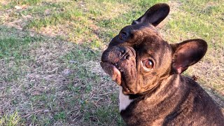 Что если собаке сказать ПОШЛИ ГУЛЯТЬ во время прогулки?