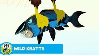 Wild Kratts: Flip-Flop thumbnail