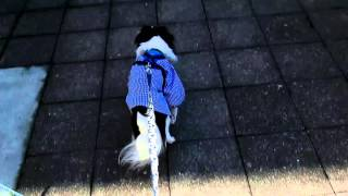 犬 狆 小鉄 怖い 盲目.