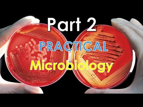 Practical Microbiology - Part 2 (بالصور)