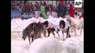 Alaska's Iditarod Trail Sled Dog Race Kicked Off Its Ceremonial Start In Anchorage On Saturday.  Doz