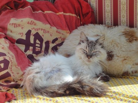 Dying cat given second chance at life (miracle, rife frequencies, spooky2, health recovery)