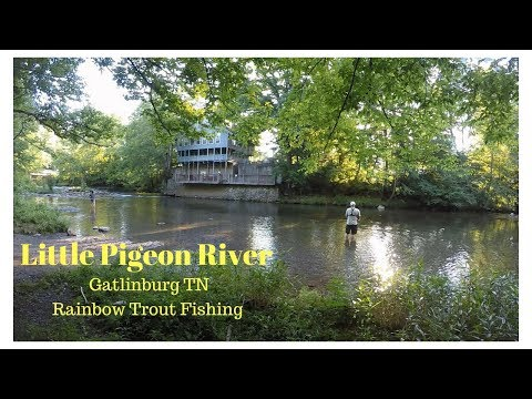 Rainbow Trout Fishing On The Little Pigeon River Gatlinburg TN