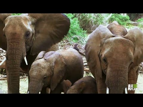 Elephant Families Are Just Like Us - They Play, They Love, They Mourn