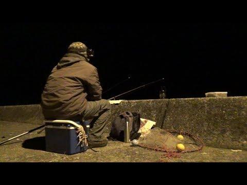 港で夜釣りしてみると