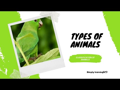 CLASSIFICATION OF ANIMALS | Types Of Animals For KIDS | ANIMAL GROUPS | Grade1 |Science Lesson VIDEO