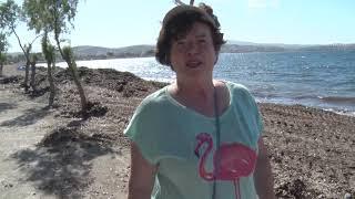 Seferihisar'da Plaj Temizliği Başladı