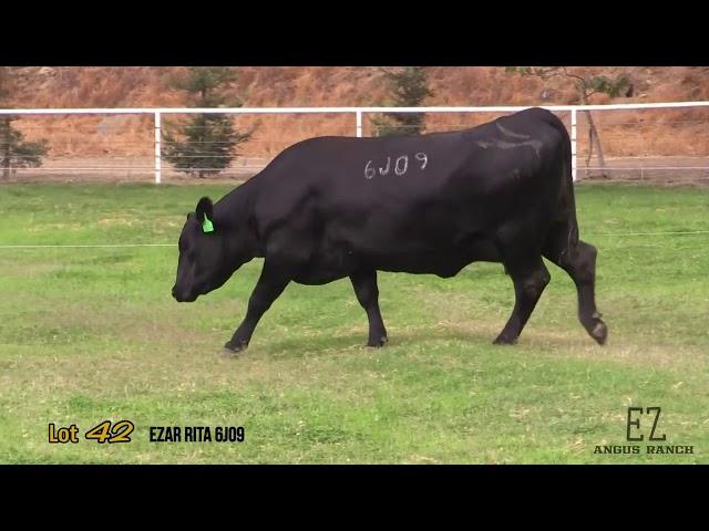 EZ Angus Ranch Lot 42