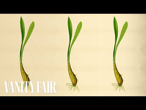 Wild Leeks, Spring Onions & Ramps-The Definitive Spring Vegetable-Snob's Dictionary-Vanity Fair