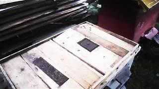 Видео Архив , июнь , какой первый медосбор!!!!