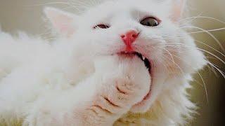 🐈Неприлично смешные кошки!😻 Подборка приколов с котами и кошками