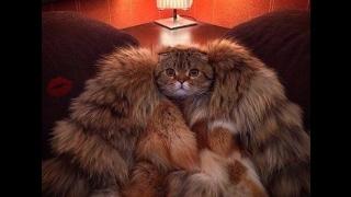 Хор котов специально для Вас     Choir cats specially for You