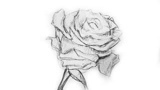 Как нарисовать розу.