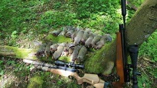 Pest Control with Air Rifles - Squirrel Shooting - Attempt on the Family Record Pt 2(This is the second part of the video where I try to break the family record of 20 squirrels in one session. If you haven't watched pt 1 then click here and watch this ..., 2016-08-21T04:30:35.000Z)
