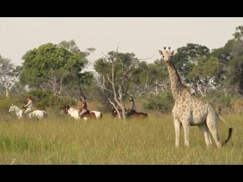 Harbor House Life: Safari on Horseback in Botswana, Episode 1