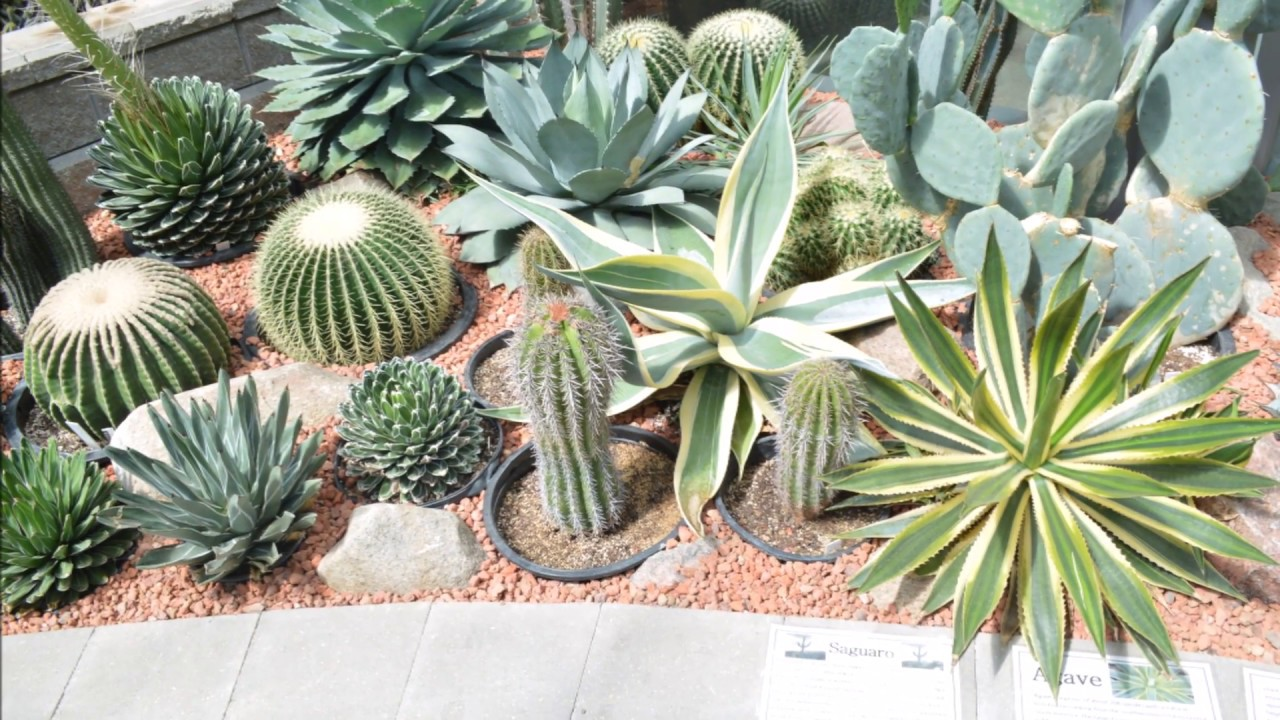 Pictures of different types of cactus plants