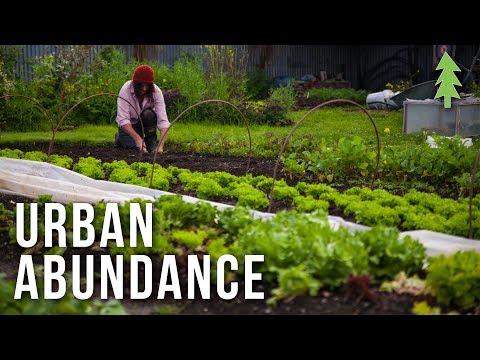 Organic Urban Farming on a 1/2-Acre Property - Urban Abundance