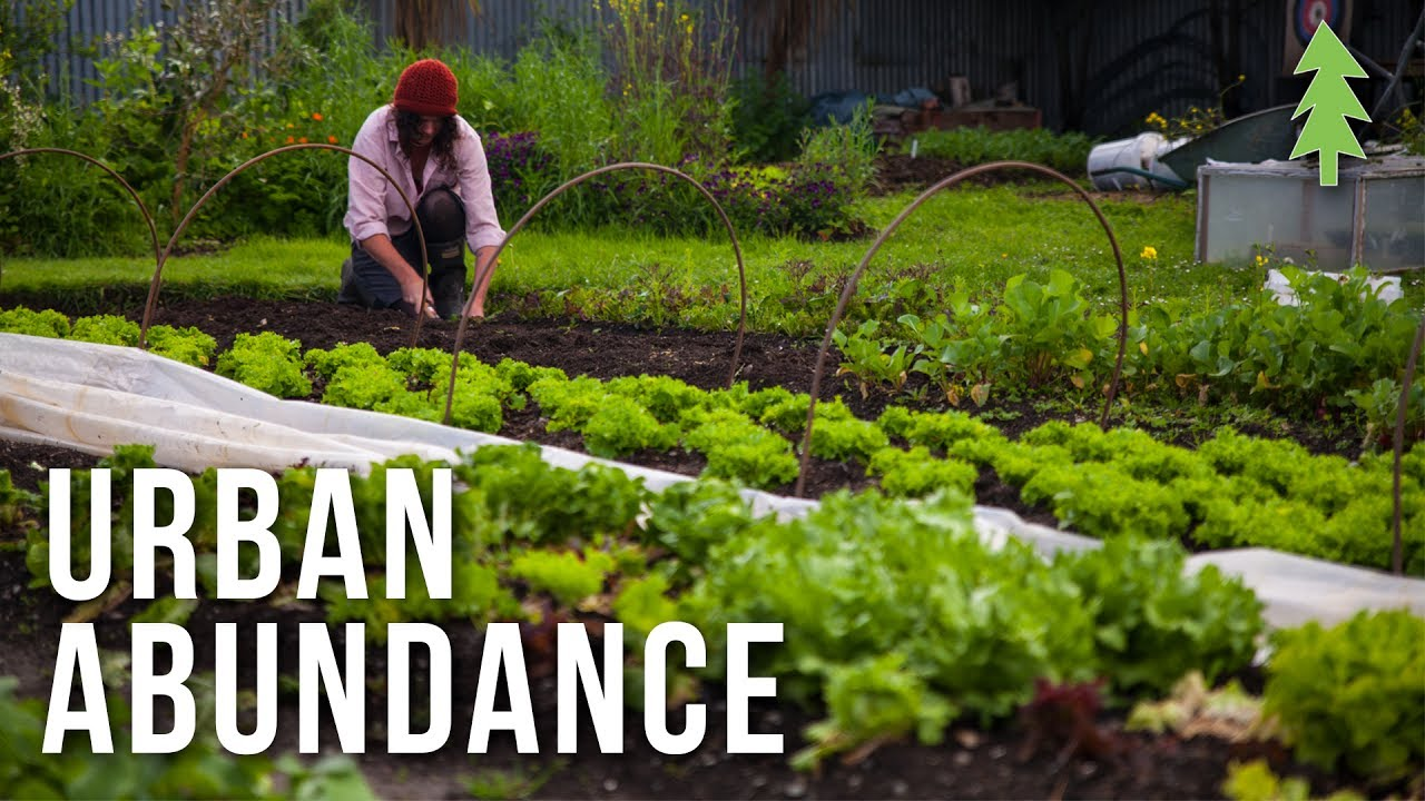 Organic Urban Farming On A 1 2 Acre Property Urban Abundance