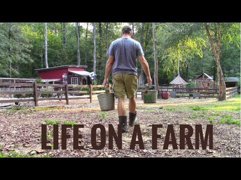 Life On A Farm - Morning & Evening Chores - Our Daily Homest