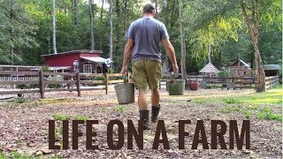 Download Life On A Farm - Morning & Evening Chores - Our Daily Homestead Routine Mp3 and Videos