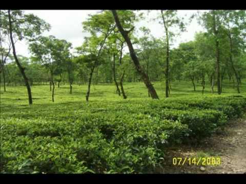 Baideshia bondhu, Uttarbangla dekhiya jaan