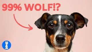 10 MOST Interesting DOG FACTS You Didn't Know