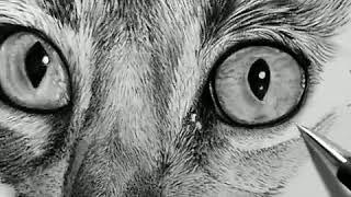 Рисунок простой карандаш (кошка)