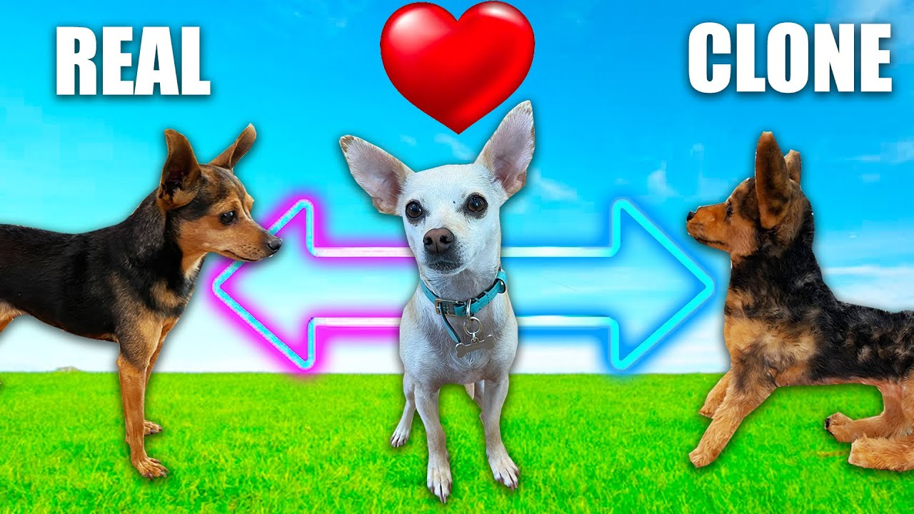Testing Our Crush To See Which Dog She Loves More - PawZam Dogs