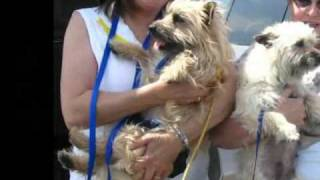 Rescuing Toto Dogs